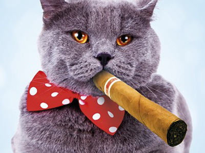 Серый кот курит сигару на камеру.