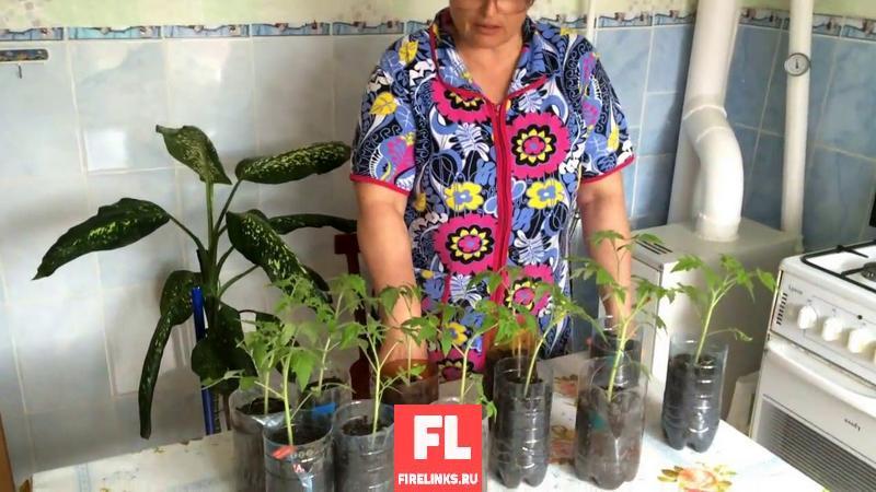 Выращивание рассады работа для пенсионеров на дому